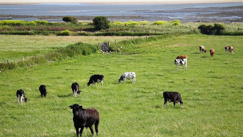 Dairy Farming App Support
